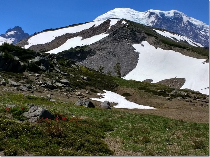 A green and brown meadow with some wildflowers and rocks in the foreground and the summit of mt rainier against a blue sky in the background
