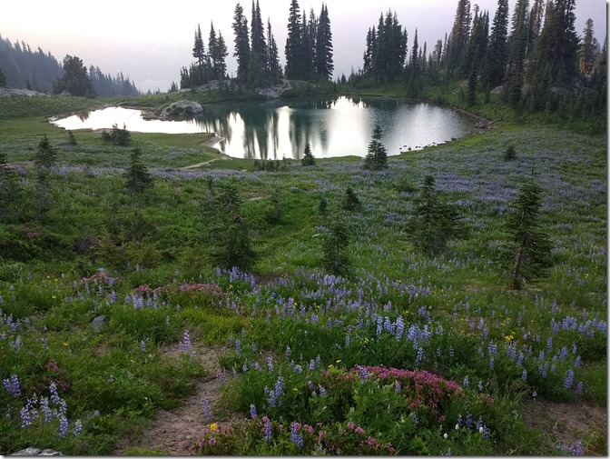 multi colored wildflowers in the foreground at dusk in front of a small pond on a mt rainier wildflower hike