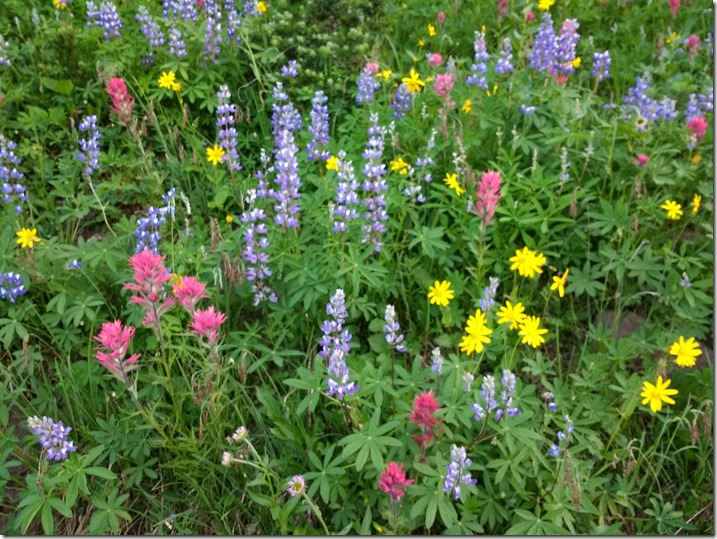 a close up of multicolored wildflowers