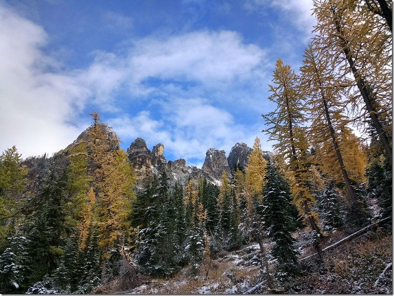 Golden larches mix with evergreen trees against high mountains on the Blue lake larch hike. There is a dusting of snow on the trees and rocks and the sky is blue with white clouds