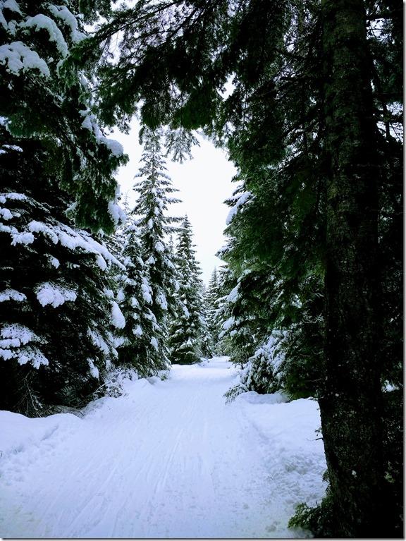 Ski trail in Crystal Springs sno park