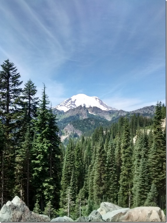 Mt Rainier in the distance, tall evergreen trees in the foreground