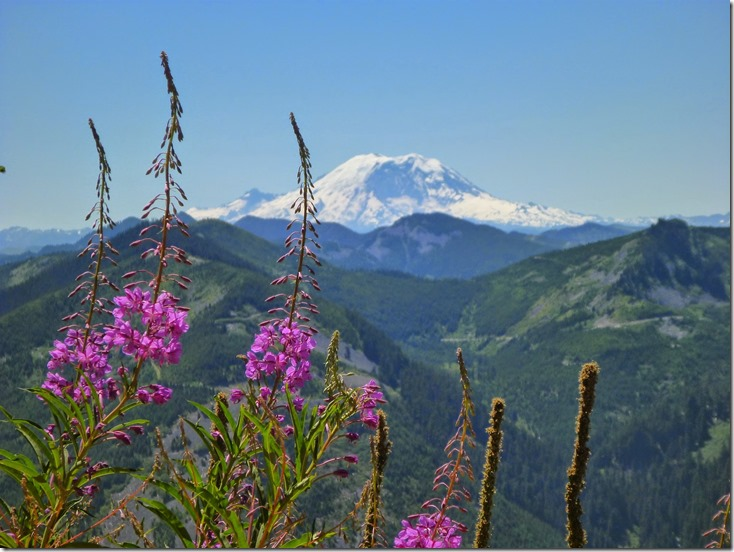 Mt Rainier in the background with high green mountains and purple flowers in the foreground