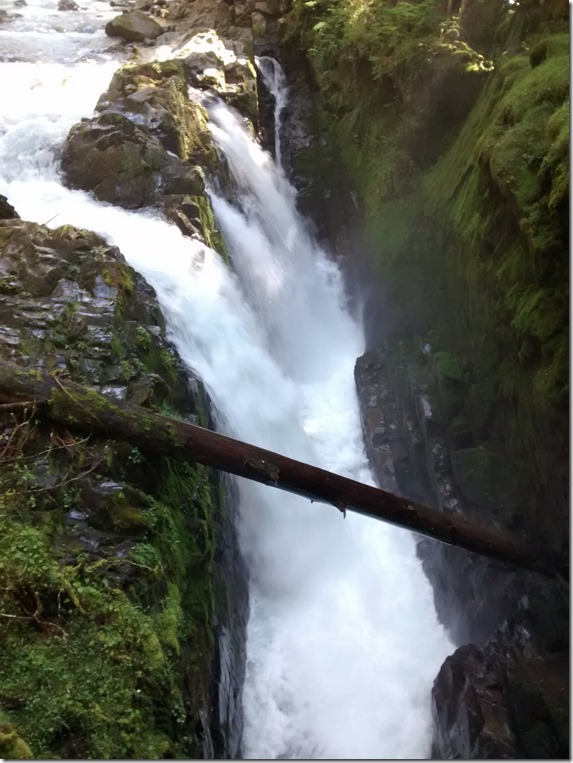 A waterfall with several separate cascades flows over steep rocks surrounded by green undergrowth in Olympic National Park