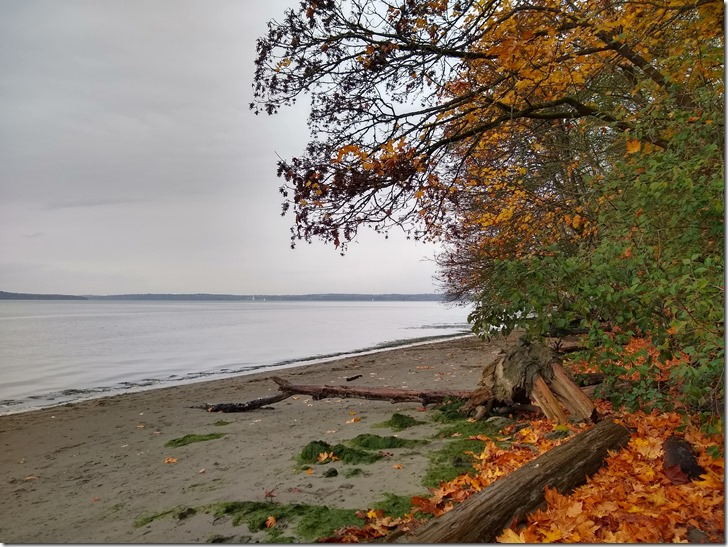 Dash Point State Park Beach Fall
