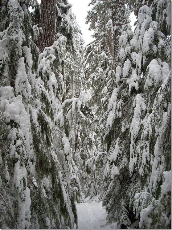 winter day trip to mt rainier wonderland trail near longmire