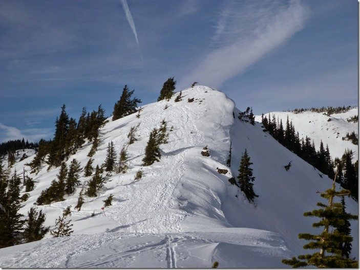A hill in winter on a sunny day with a few evergreen trees on Hurricane hill in Olympic National Park