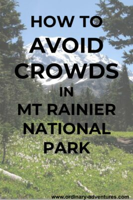 Wildflower meadow, evergreen trees and a large mountain against a blue sky. Text reads: How to avoid crowds in Mt Rainier National Park