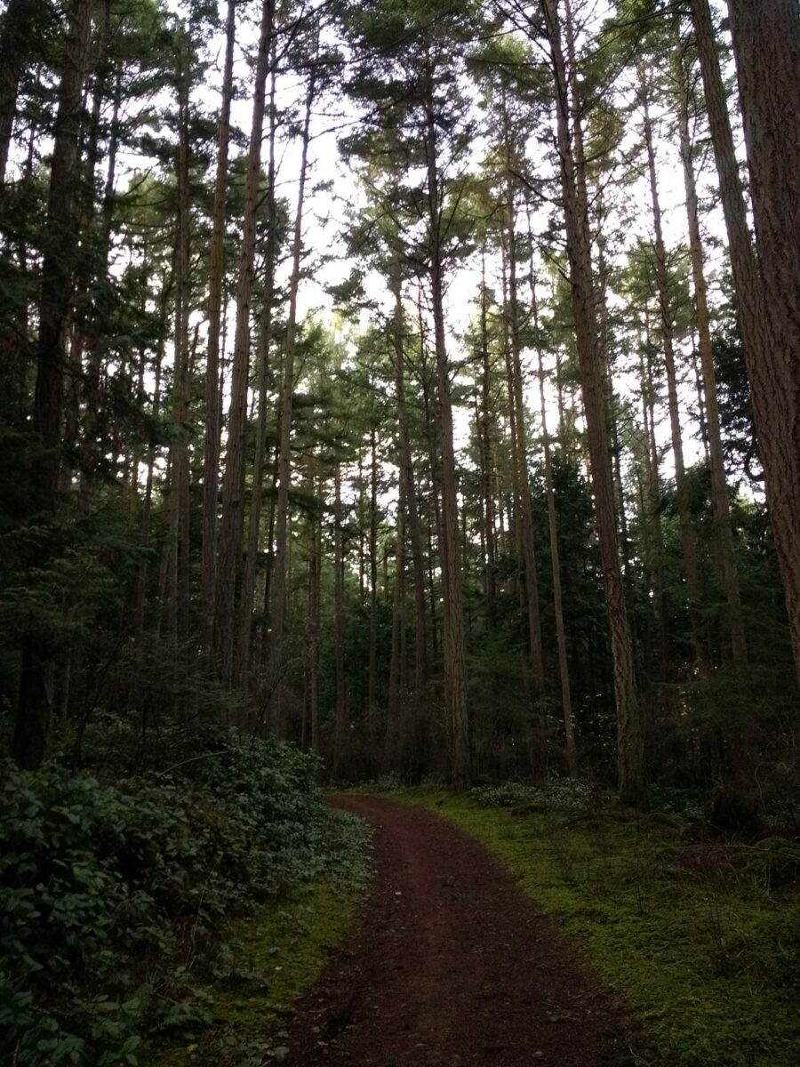 A trail winds through a green forest on a cloudy day