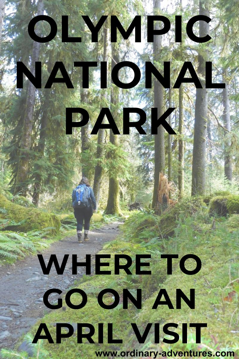 A woman with a backpack walking on a trail through a forest of tall trees and mossy undergrowth. Text reads: Olympic National Park, where to go on an April visit