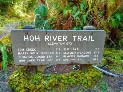 A trail sign for the Hoh River trail showing the mileage to various points surrounded by ferns and moss