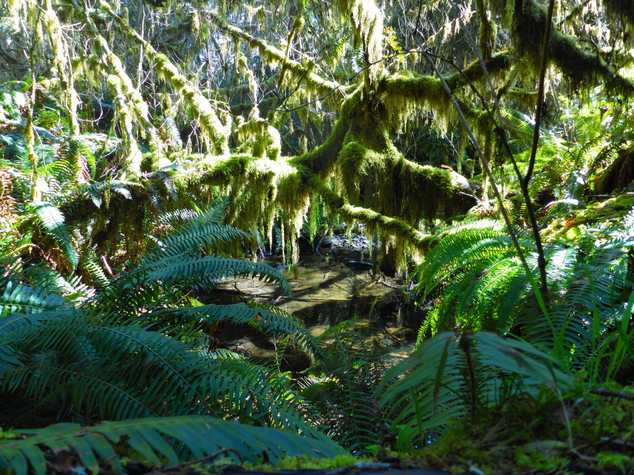 Ferns and low branches covered in moss in a forest environment