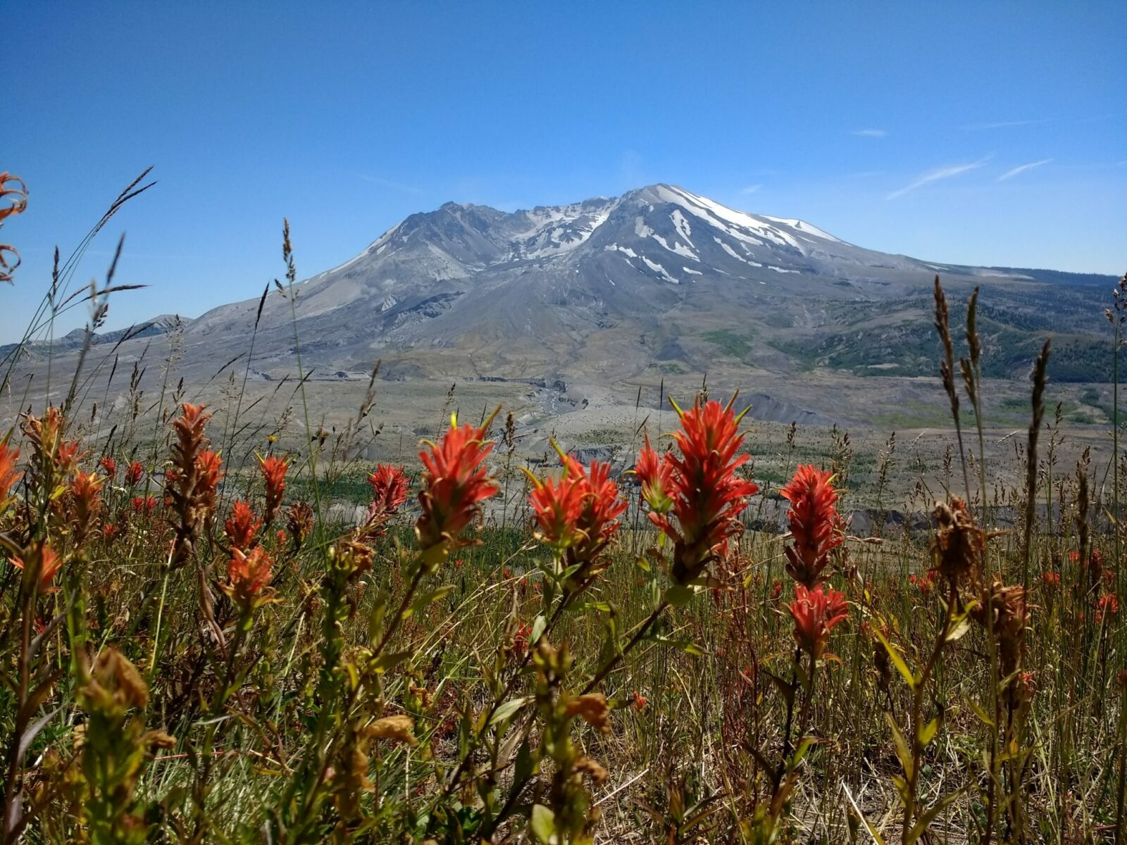 Volcano against a blue sky with red wildflowers in the foreground
