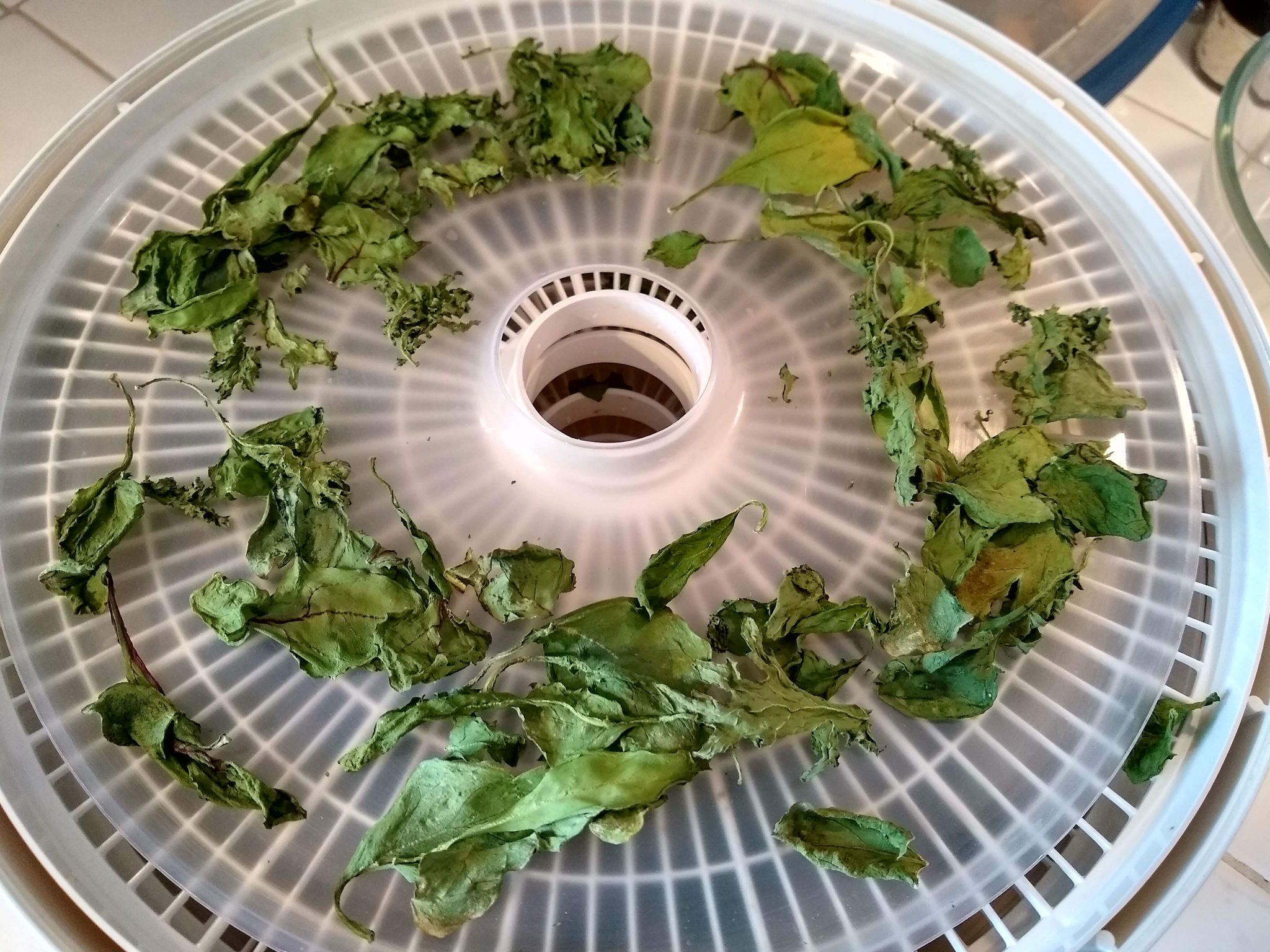 A dehydrator tray with dried spinach and kale