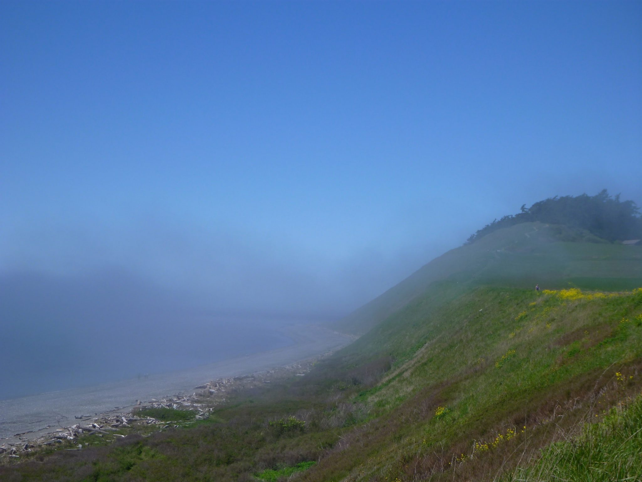 A bluff with trees and yellow flowers on the right and a beach with driftwood on the left. It's a sunny day with blue sky and there is fog rolling across the water