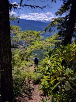 A person looks out across a forested valley towards distant mountains. The hiker has a hat and a backpack and is seen through nearby bushes.