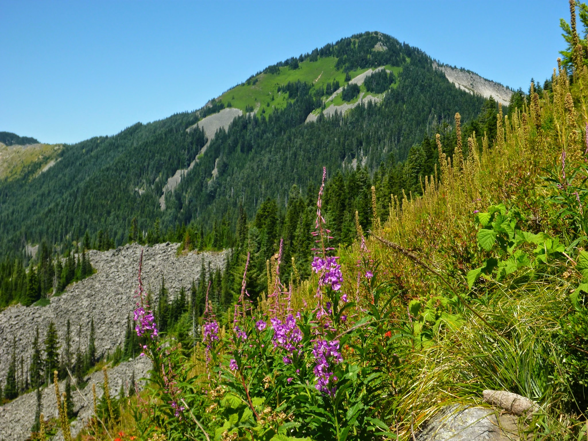 Wildflowers and grass in the foreground, with a distant forested mountain on a sunny day on the Bandera Mountain hike