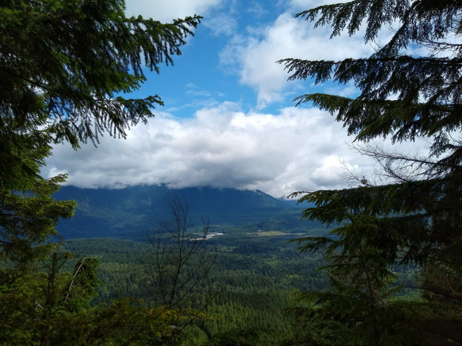 A partially clouded view from Cedar Butte,  with a distant hillside and a valley below. it is framed by two evergreen trees.