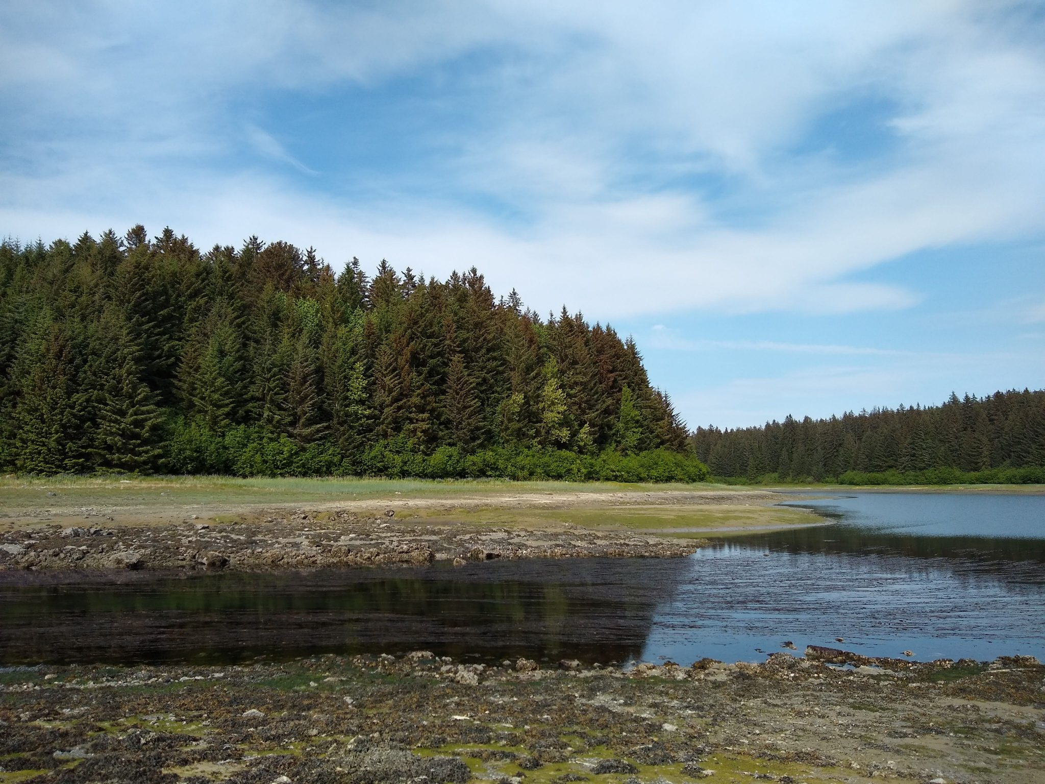 Green evergreen trees on the shore and a river flowing into the sea creating an estuary. The tide is low, there are mudflats and rocks exposed.
