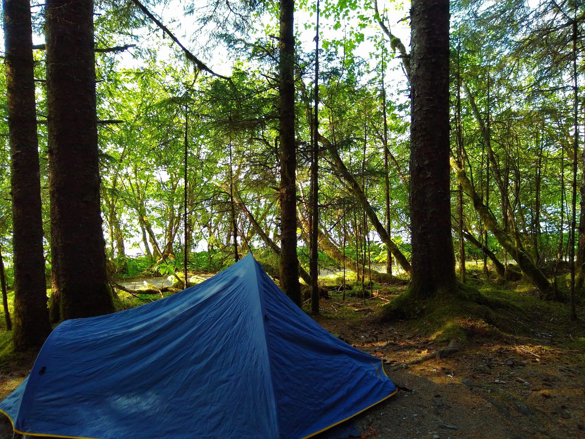 A small blue tent is pitched in a campsite to visit Glacier bay national park. There are green trees around, and the water is just visible between the trees