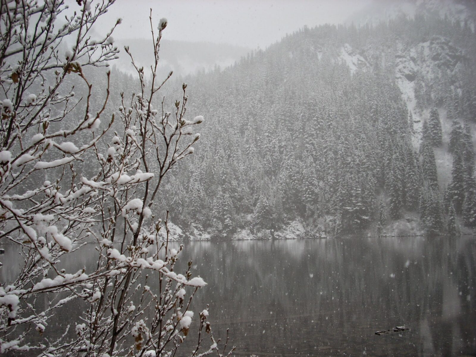 Annette Lake is an alpine lake near Snoqualmie Pass. Here the lake is receiving its first snowfall of the year. Visibility is low and you can see big white flakes fallign on the lake and forest. Snowy evergreen trees are seen across the lake