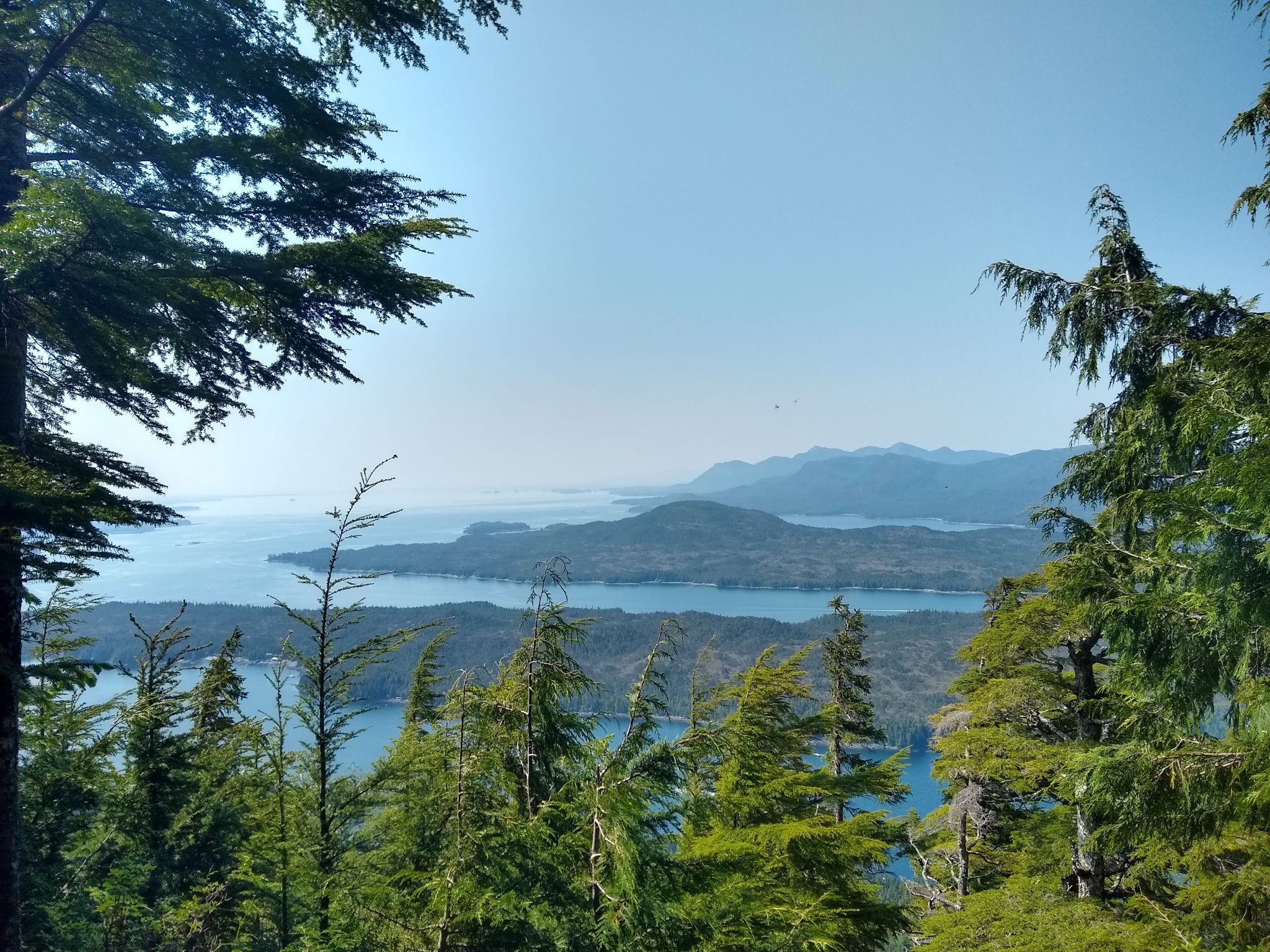 Several mountain islands covered in Evergreen trees are surrounded by blue water and framed in the foreground by evergreen trees on a hike in Ketchikan Alaska
