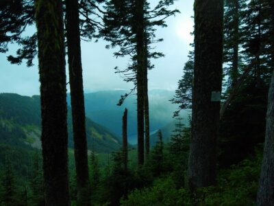 Tall trees in a foggy forest. Between the trees forested hillsides are visible and a distant lake