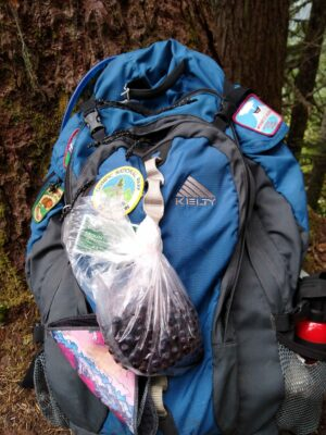A blue and black backpack with patches on it. A plastic bag full of ripe huckleberries is tied to the outside