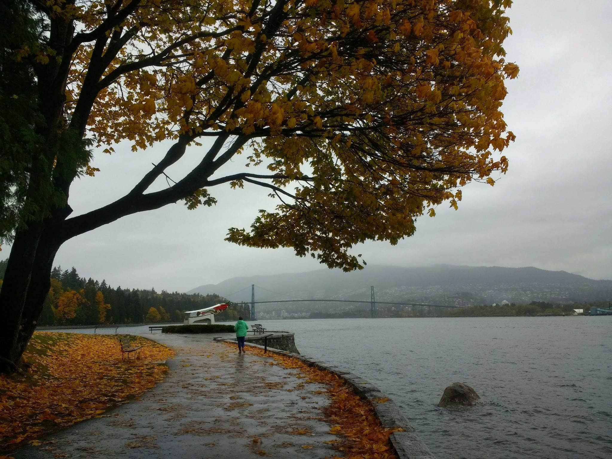 A paved trail along the water under a tree with yellow fall leaves. Many of the trees leaves are already on the ground. It's foggy and raining and a suspension bridge is visible in the distance