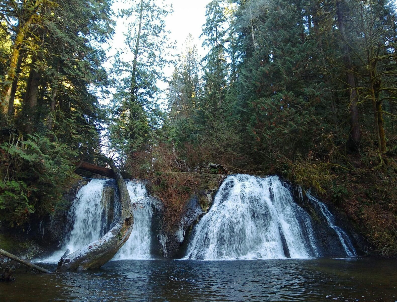A beautiful winter hike near Seattle is Cherry Creek Falls. It has two sides that plunge over a rock into a pool below. The waterfall is surrounded by evergreen trees and ferns.