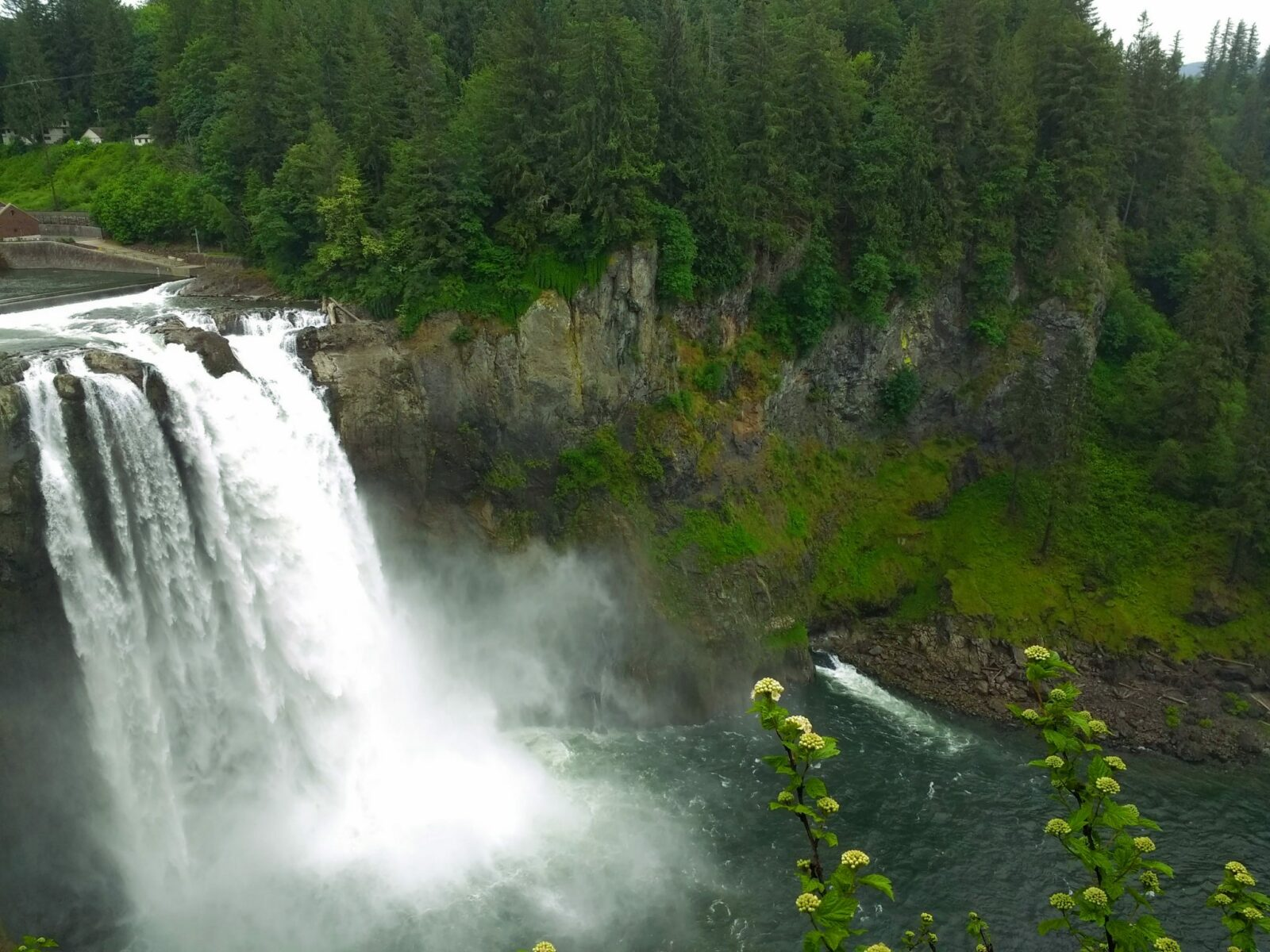 A wide and high waterfall in washington state plunges over mossy rocks to the river below, surrounded by forest
