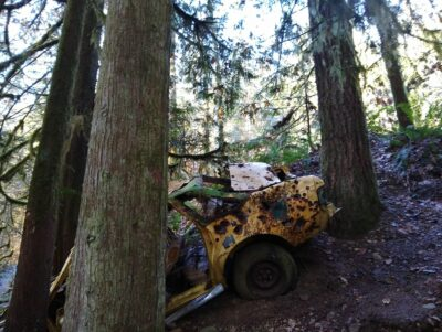 An old, yellow, rusty car wedged between three trees along the side of a trail.