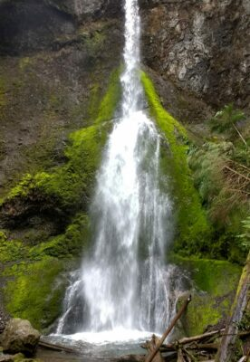 A waterfall coming over a mossy cliff. The waterfall is narrow at the top and wider at the bottom as it drops into a pool filled with logs