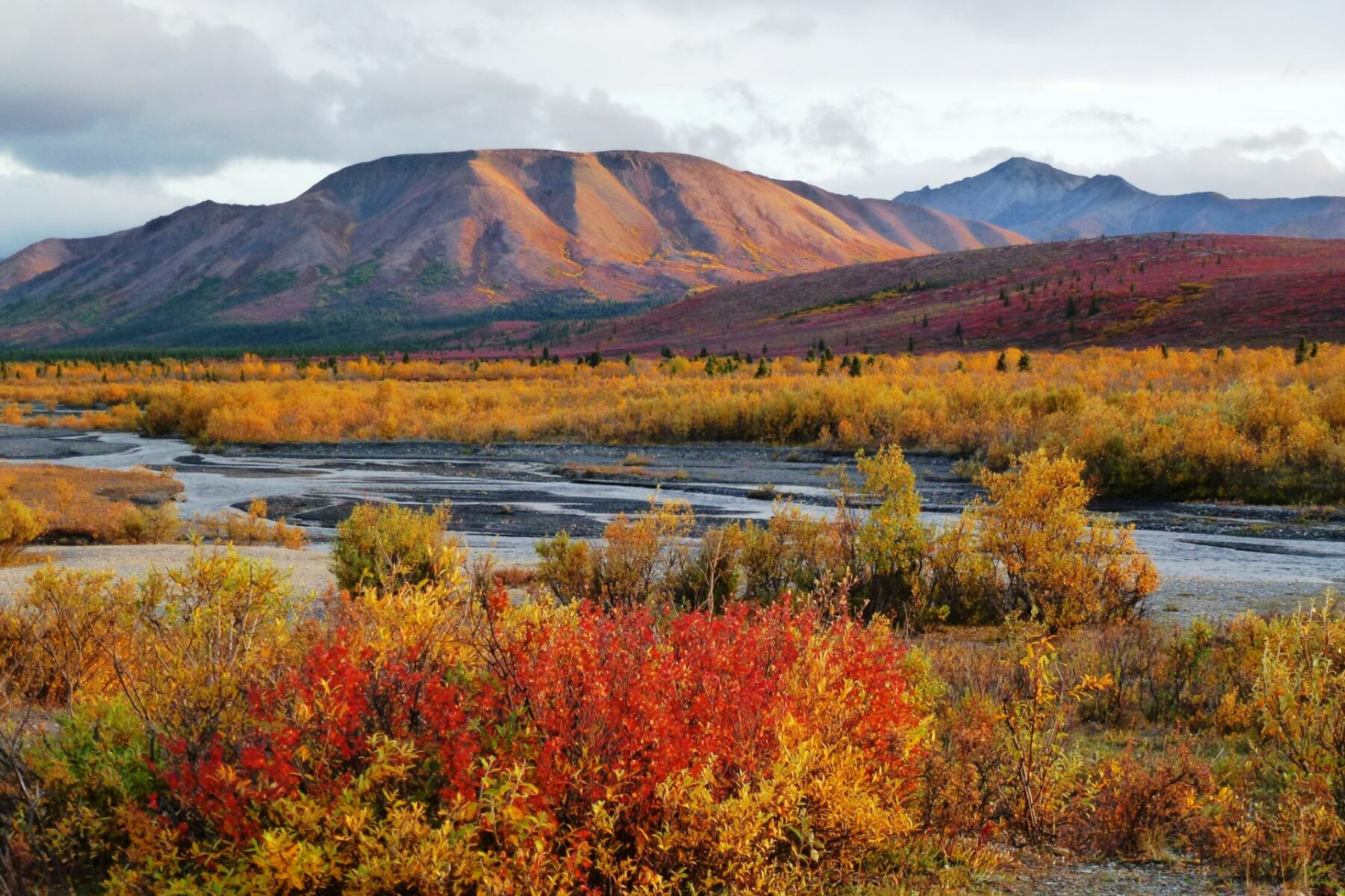 Sunset on fall colored shrubs and hillsides next to the Savage River Campground in Alaska's Denali National Park