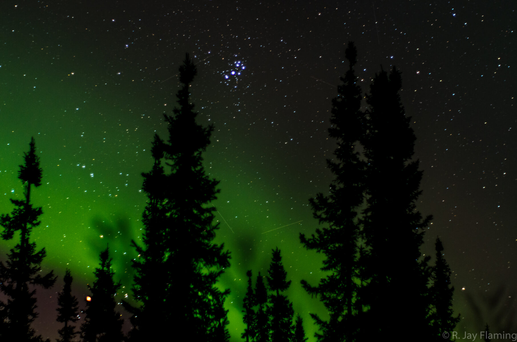 A display of green northern lights above black spruce trees against a background of stars in Fairbanks Alaska