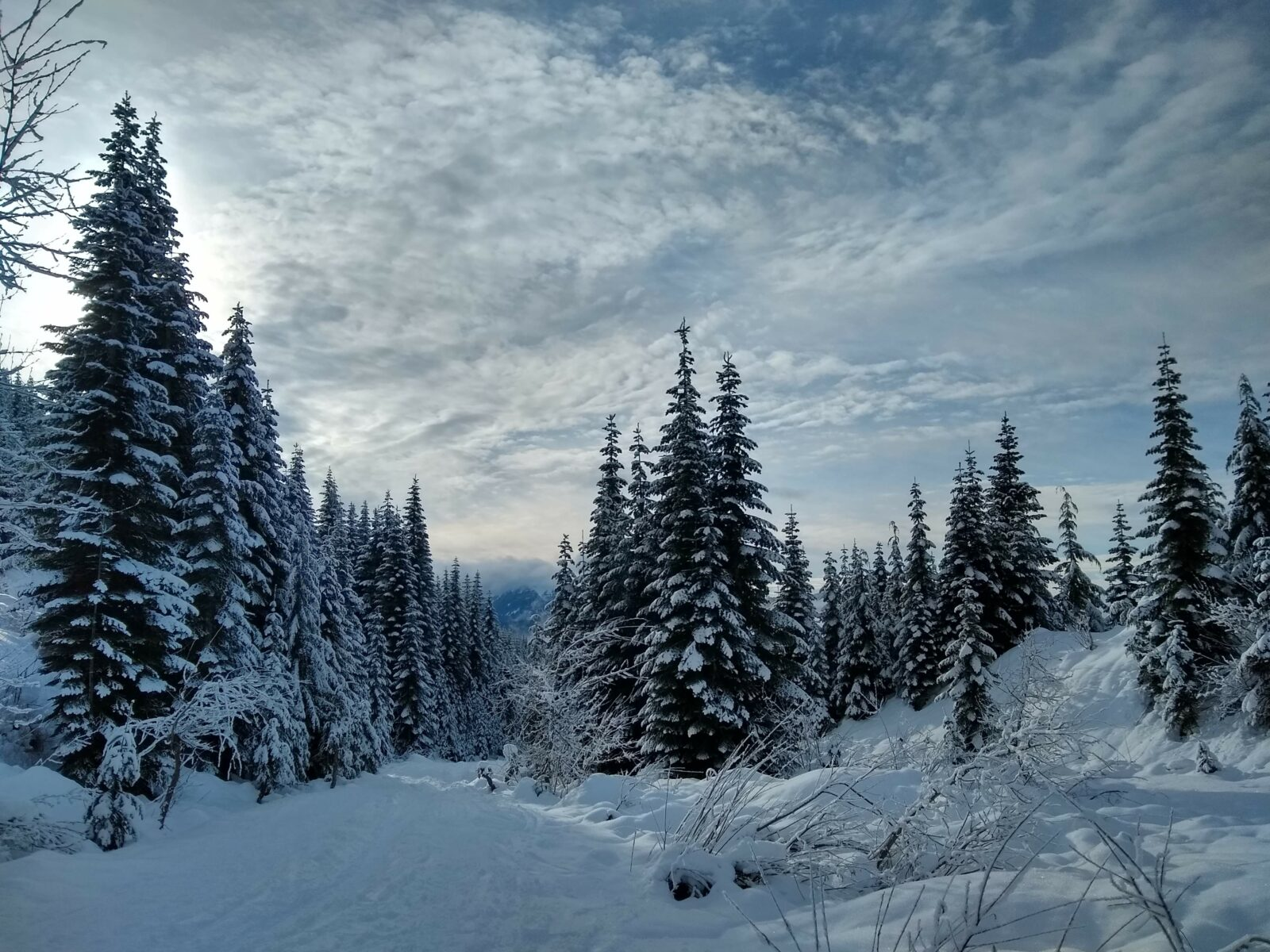 Snow covered evergreen trees along the side of a snow covered trail on a cloudy day. A snowshoe outing at Snoqualmie Pass is a great winter day trip from Seattle