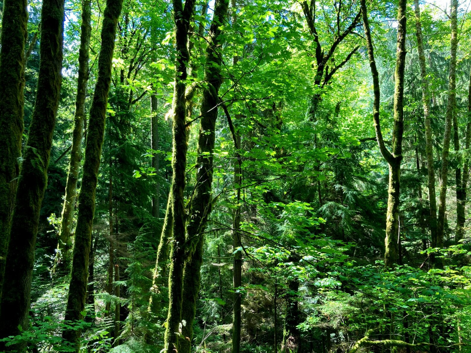 Dense green forest and ferns below on a sunny day
