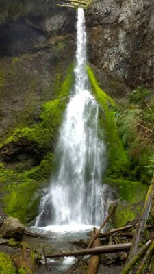 A tall narrow waterfall gets wider as it cascades down a vertical rock face in Olympic National park. There is moss on the rocks next to it and a small pool below. Fallen logs cross the pool