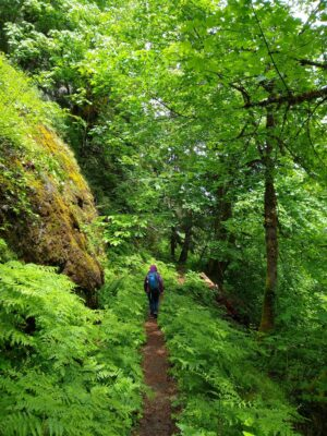 Deep green trees and undergrowth surround a narrow dirt trail. A hiker with a purple coat and blue backpack is alone on the trail
