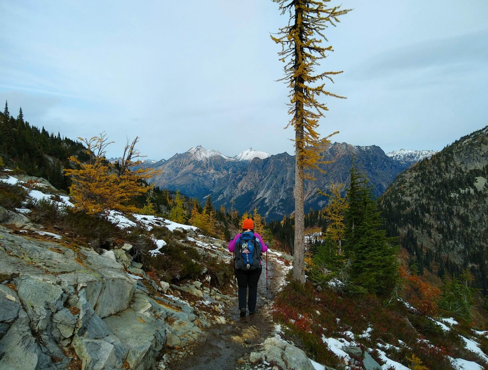 A hiker on a trail next to a tall orange larch tree in October. In the distance are snow dusted mountains