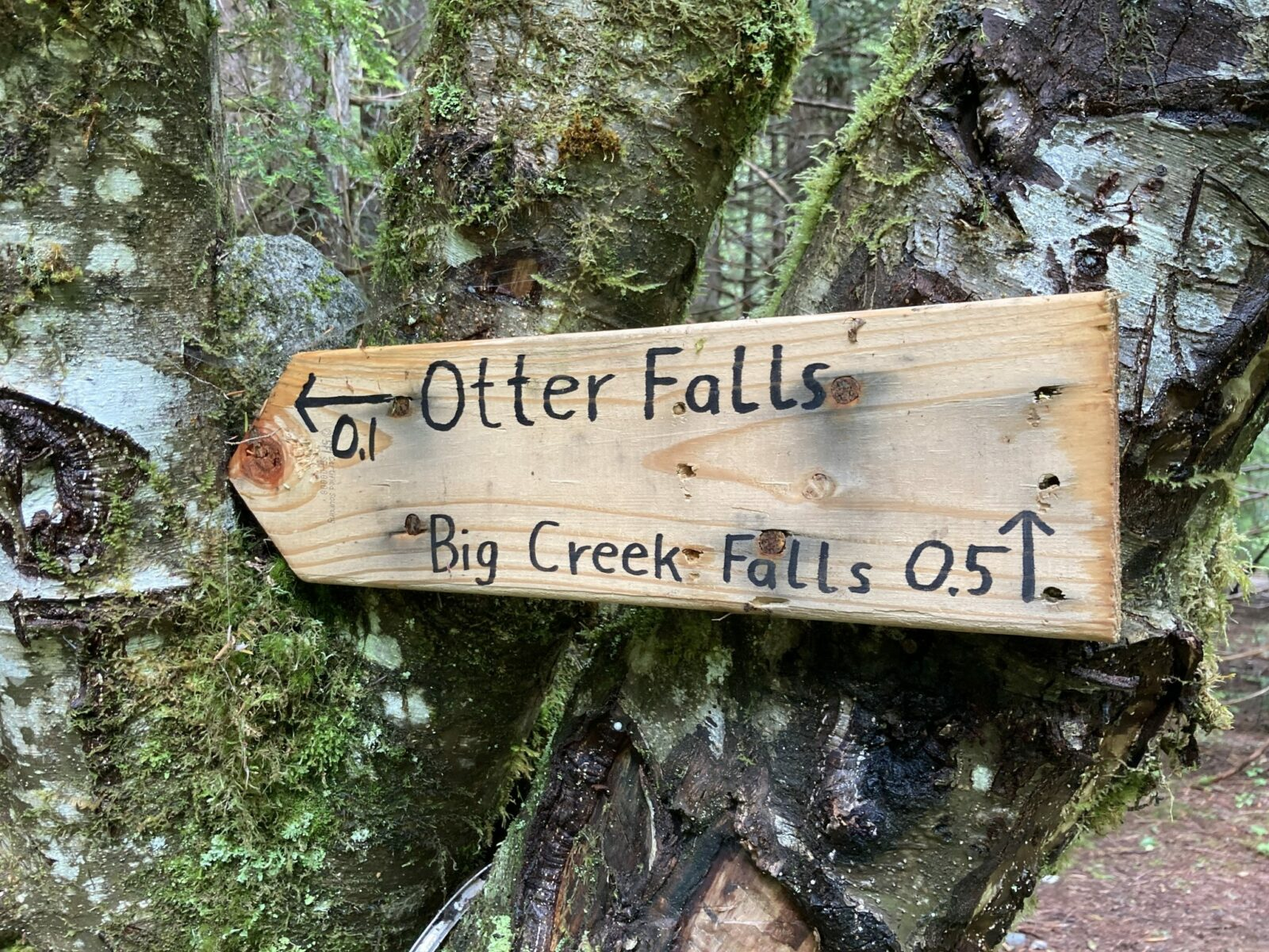 A wooden trail sign with an arrow left for Otter Falls and right for Big Creek Falls