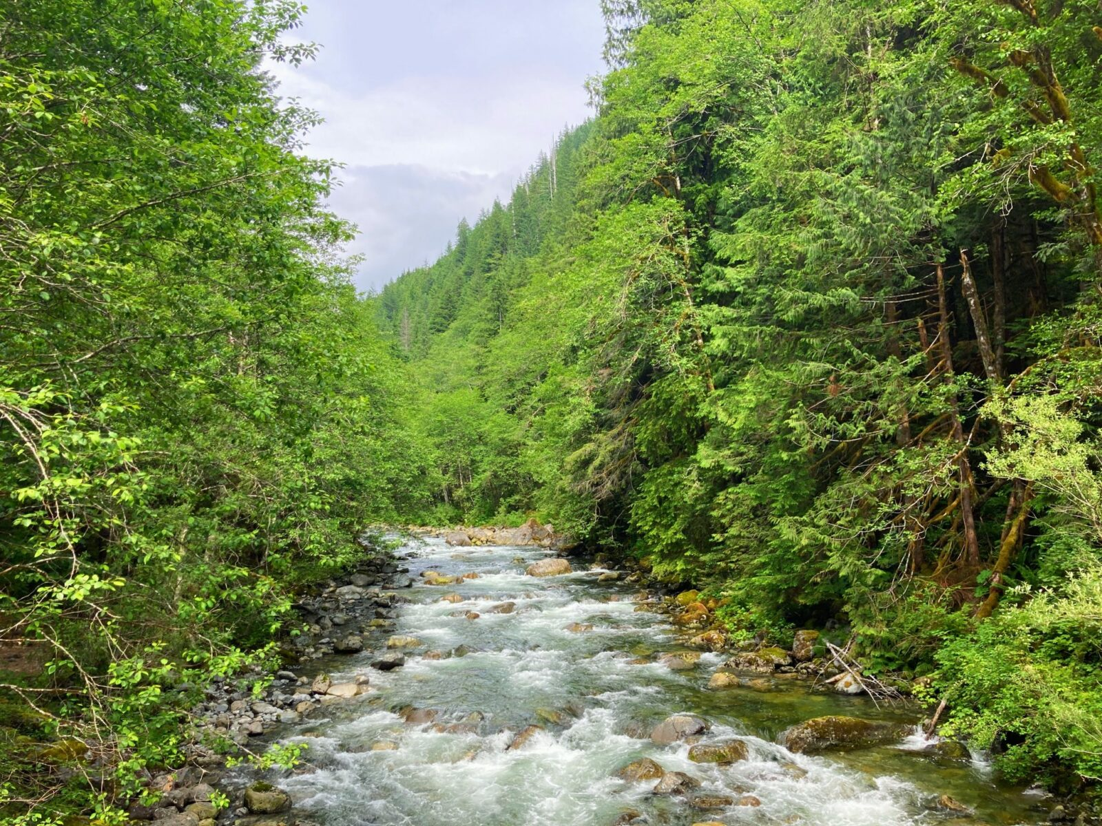 The Taylor River rushes over rocks and moss through an evergreen forest along the length of the Snoqualmie Lake trail to Otter Falls