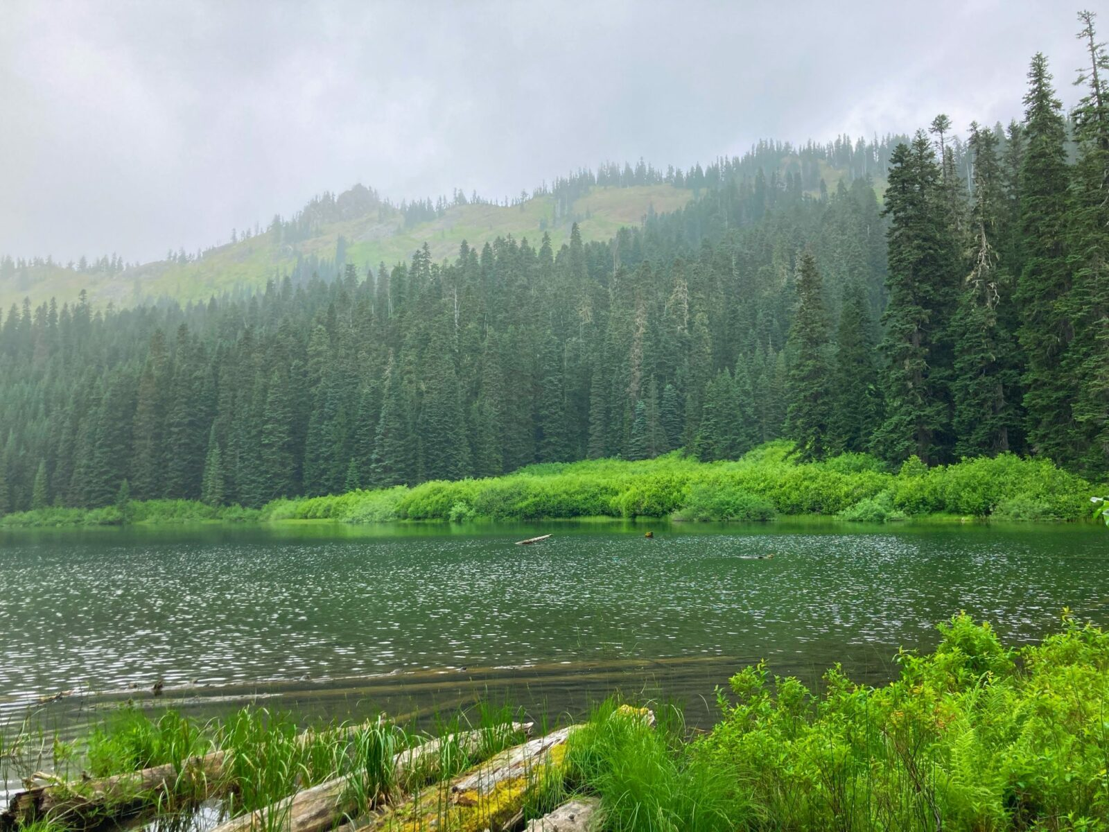 Cottonwood Lake, a smaller and less busy lake along the Mirror Lake trail. Clouds surround the mountains and the lake is ringed by evergreen trees and green undergrowth. There are a few logs in the foreground
