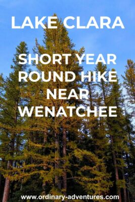 Golden larch trees against a blue sky. Text reads: Lake Clara short year round hike near Wenatchee