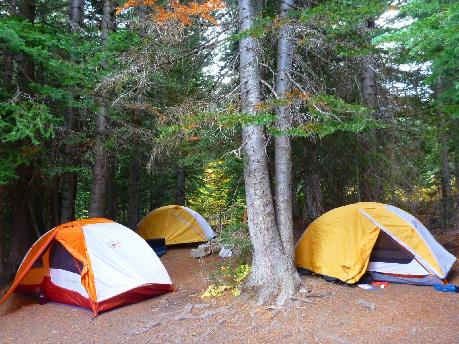 Three tents are set up in the open space between a group of evergreen trees near Lake Stuart. The tents are white, yellow and orange and have their rain flys open