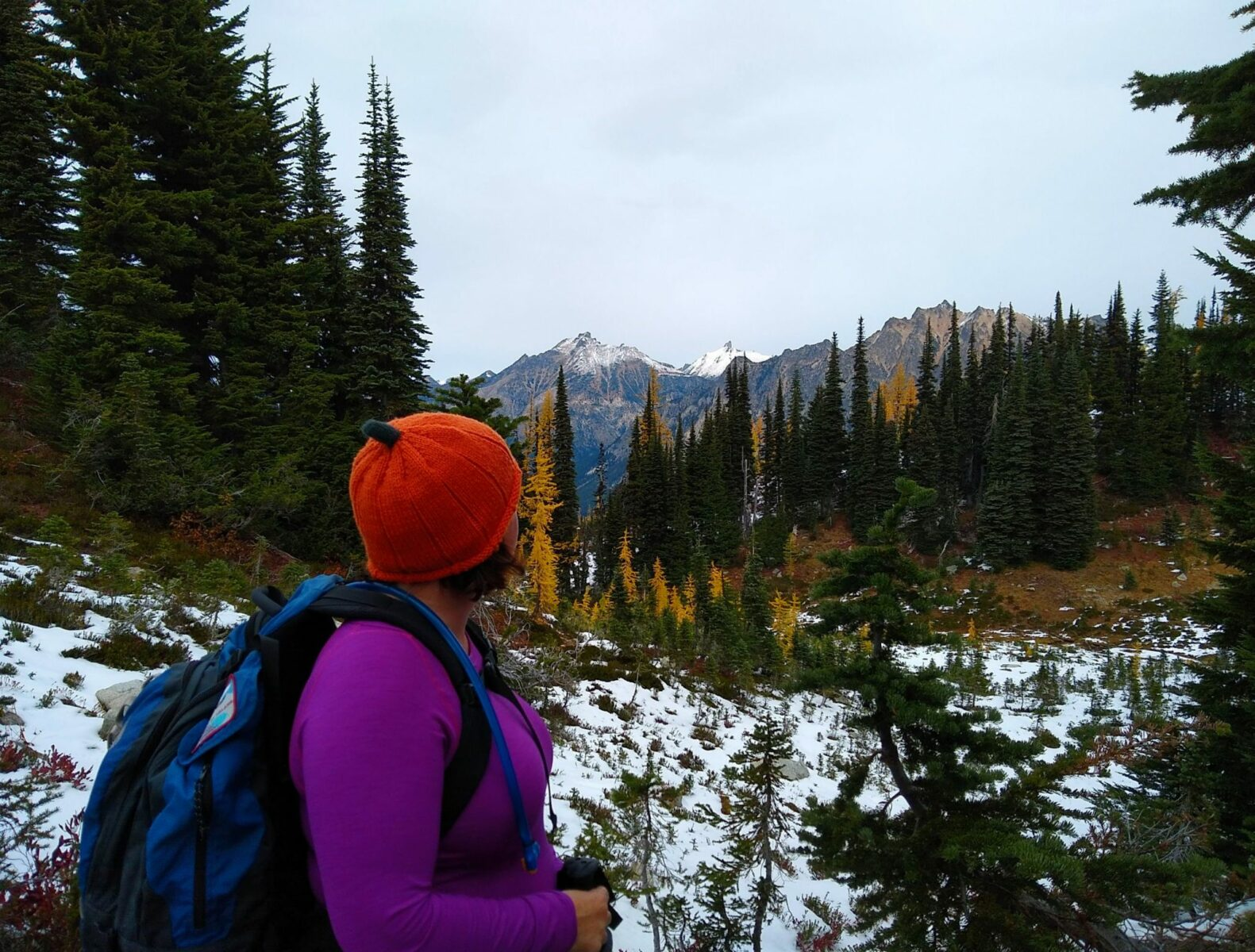 a hiker enjoys one of the best larch hikes in washington, maple pass. there is a bit of snow on the ground and a mixture of evergreen and golden larch trees in the foreground and distant mountains. The hiker is wearing an orange hat, a purple long sleeved shirt and a blue backpack