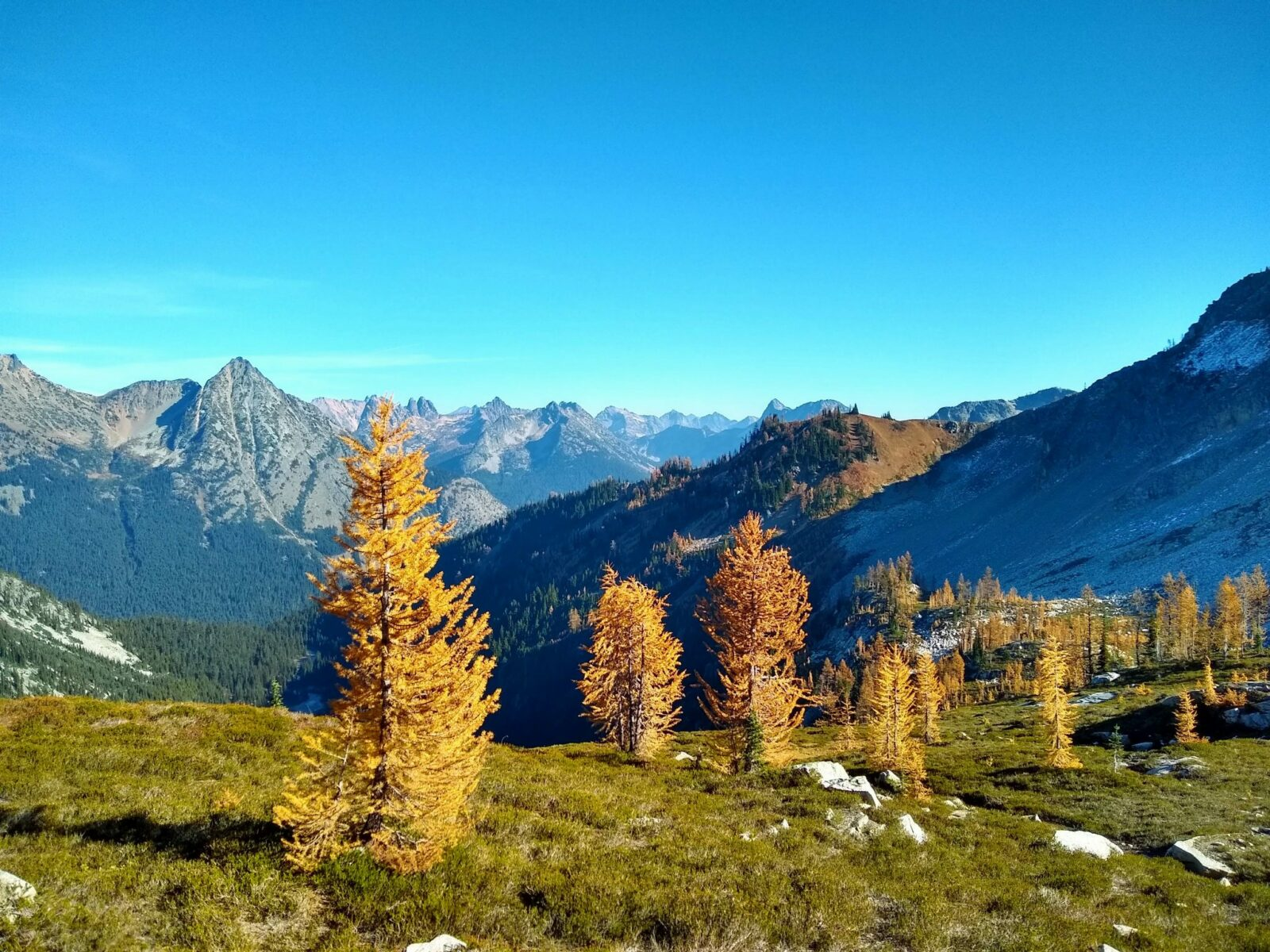 A few golden larch trees on a high open meadow ridge with a view of many distant mountains in the background on the Maple Pass Trail near the boundary of North Cascades National Park