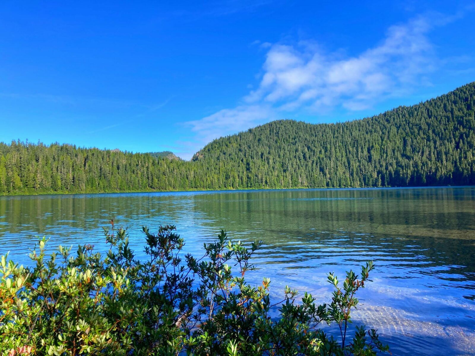 An alpine lake with green bushes in the foreground and forested hillsides in the background on a sunny day