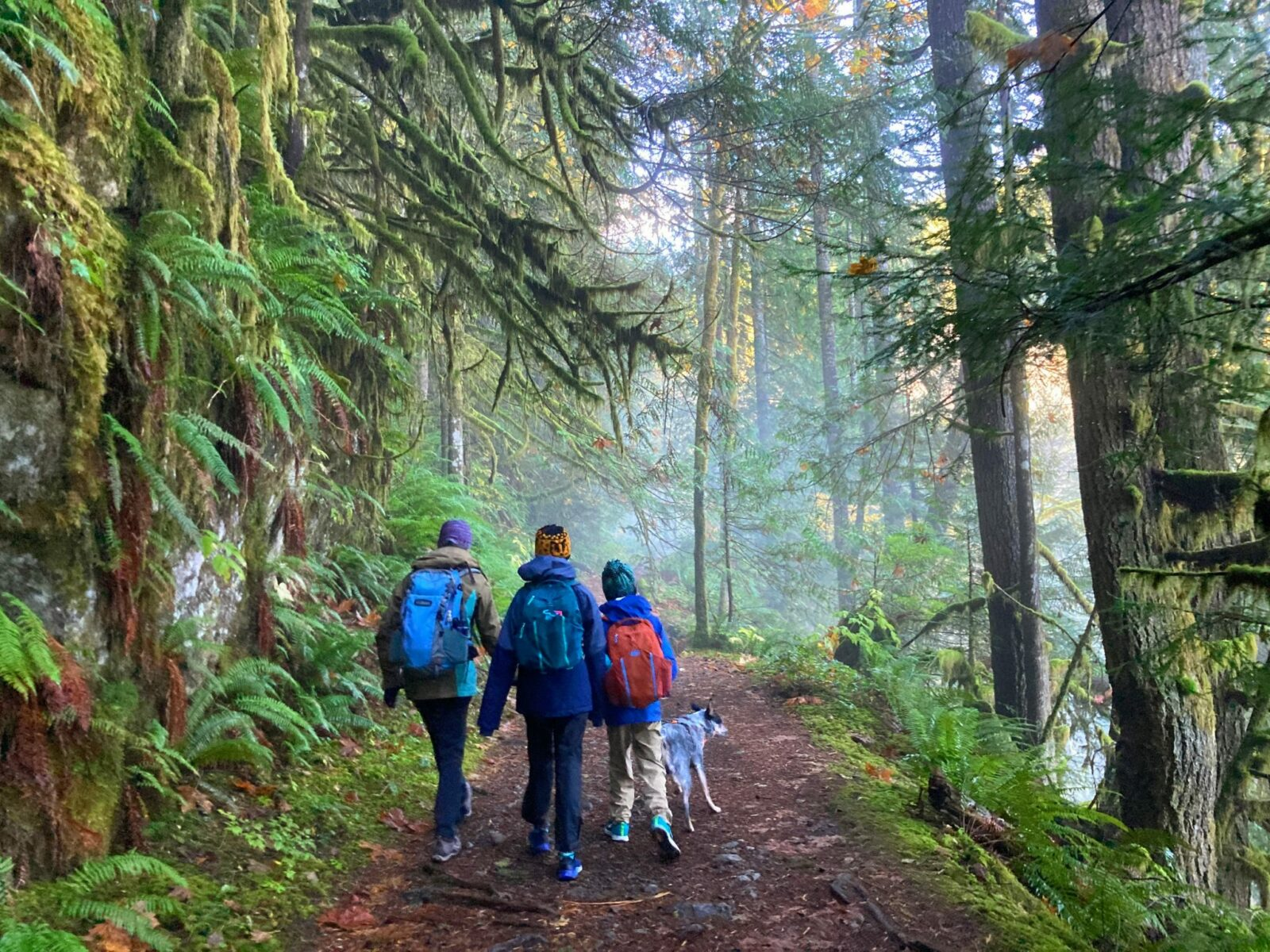 three hikers and a dog on the Boulder River trail. At this point the trail is wide enough for three people to walk next to each other. The trail is surrounded by evergreen trees and ferns and moss