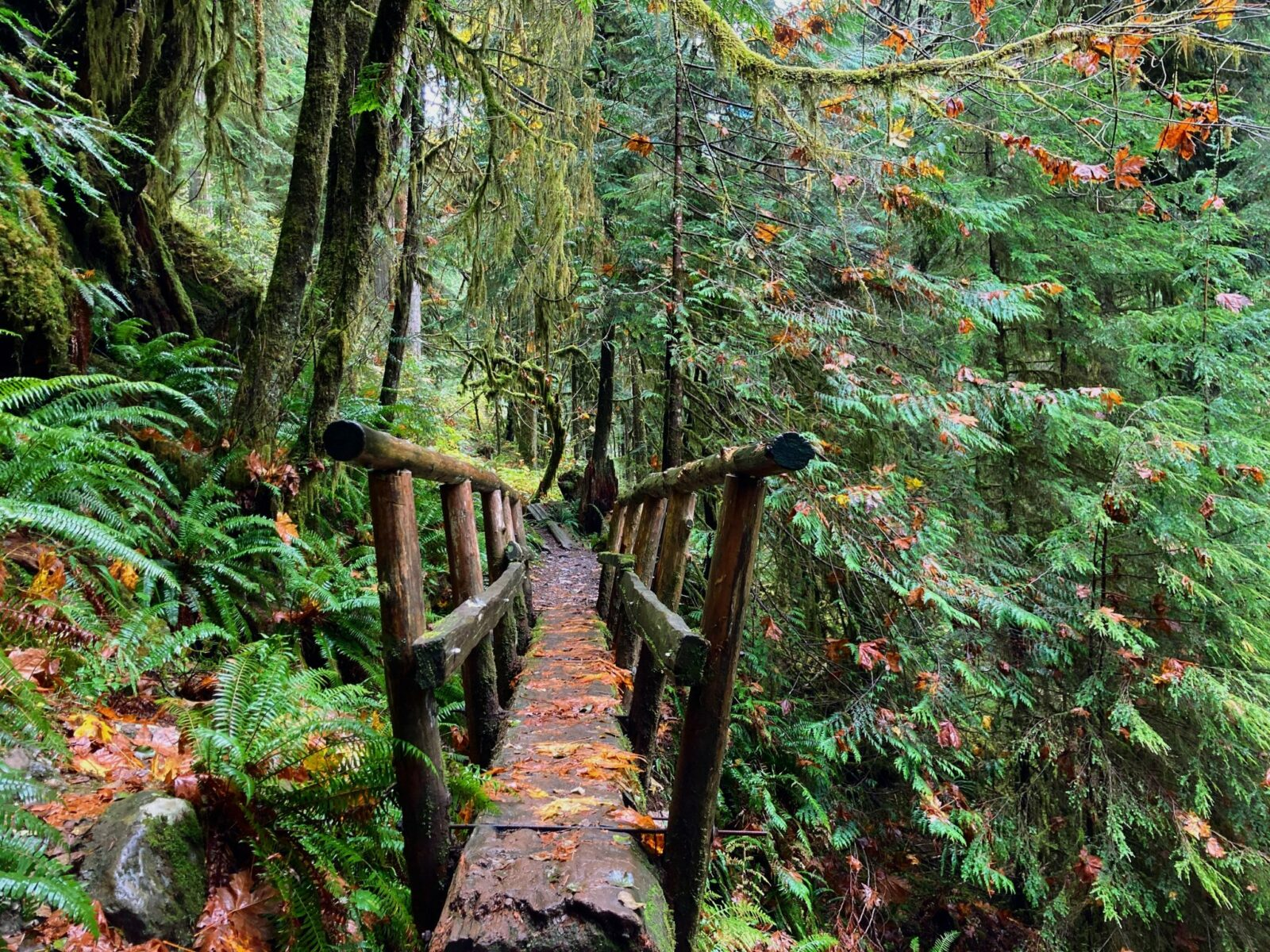 A single log bridge with wooden railings on each side. The bridge is in an evergreen forest with many ferns. There are fall leaves on top of the bridge and ferns